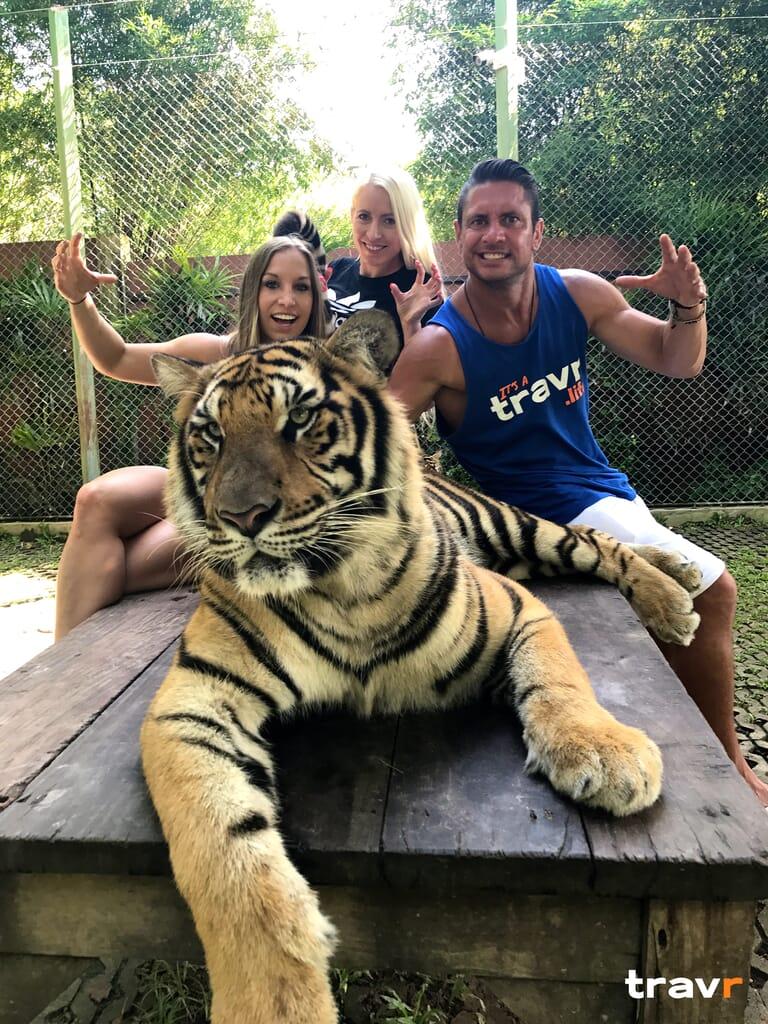 Thailand Tiger Petting